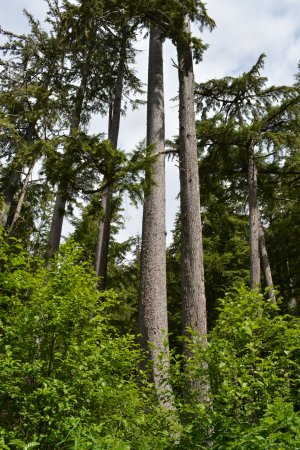 Adventure Kart Expedition: Trees that have twisted due to the continued high winds