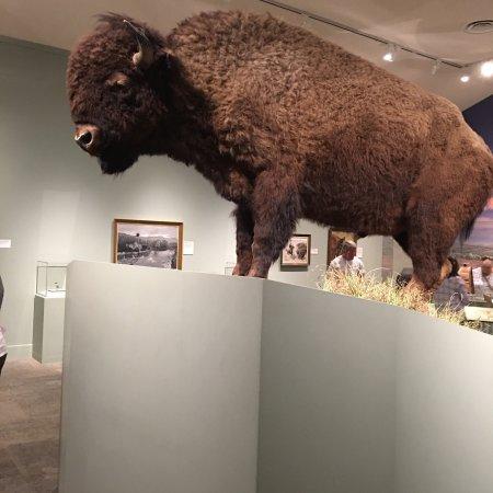 Buffalo Bill Historical Center : photo2.jpg