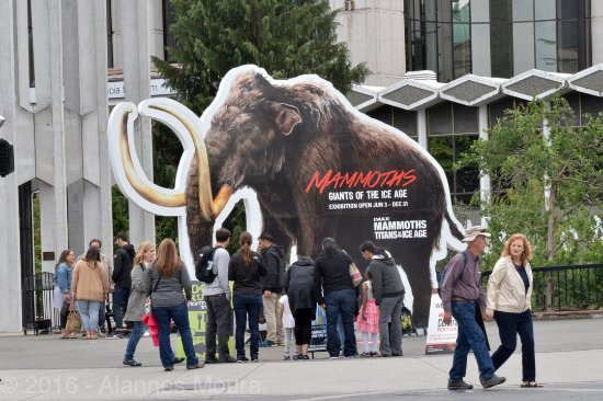 Royal British Columbia Museum: Mammoth sign. Great Exhibit.