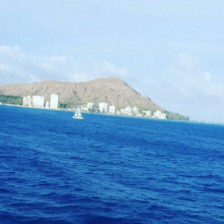 Star of Honolulu - Dinner and Whale Watch Cruises: IMG_20160616_182843_large.jpg