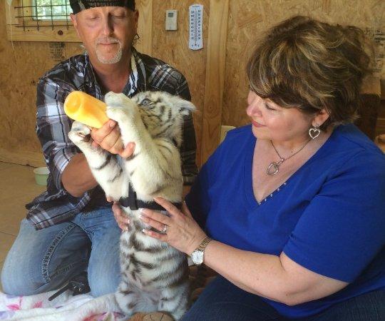 Wynnewood, OK: Sweet baby tiger...10 weeks old.