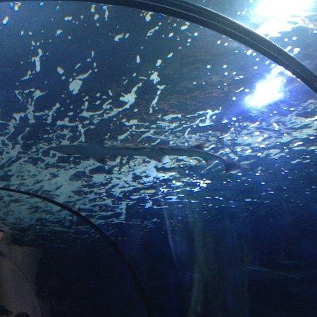 Oregon Coast Aquarium Photo