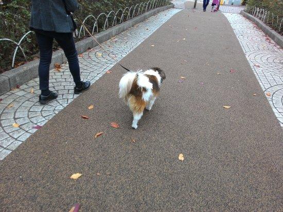 路上遇到遛狗的人士 - Picture of Arakawa Yuen, Arakawa - TripAdvisor