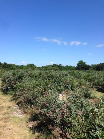 Blueberry Hill Farms Photo