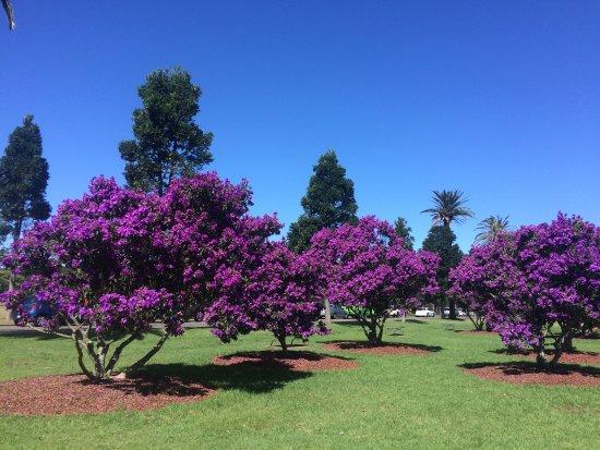 حديقة سينتينيال بارك