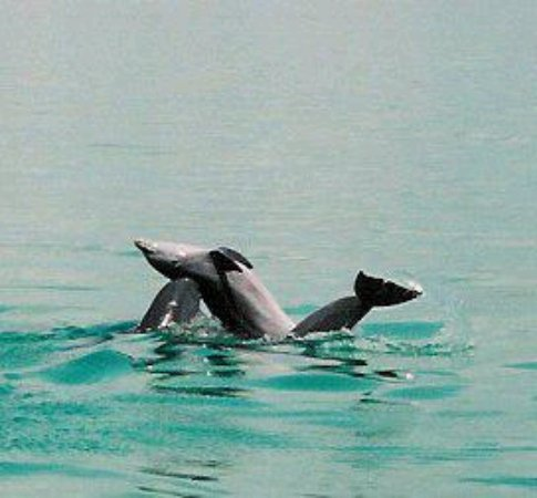 Wild About Dolphins: Dolphin's in the playground