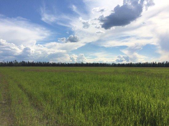 Delta Junction, AK: photo2.jpg