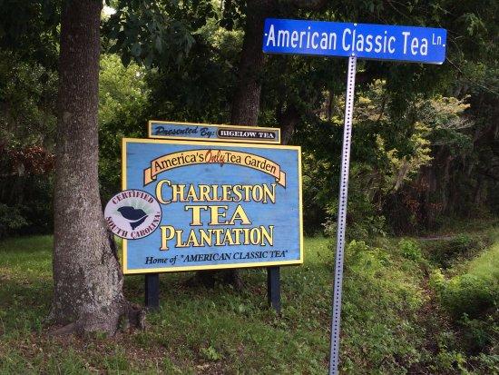 Charleston Tea Plantation : Here we are.