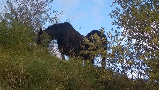 Borzonasca, Italia: Cavalli selvaggi a Giacopiane