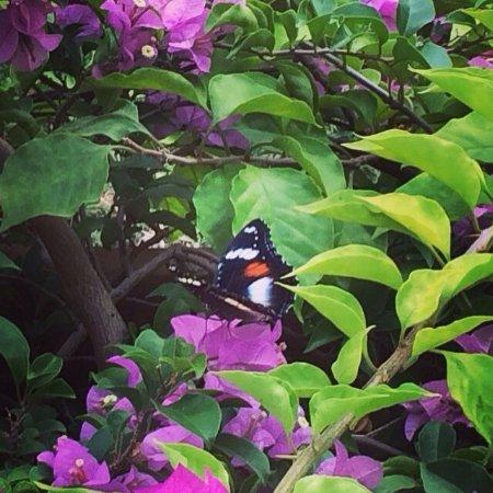 Hibiscus Attraction Center: photo5.jpg