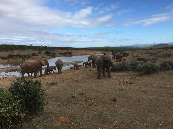 Аддо, Южная Африка: photo1.jpg