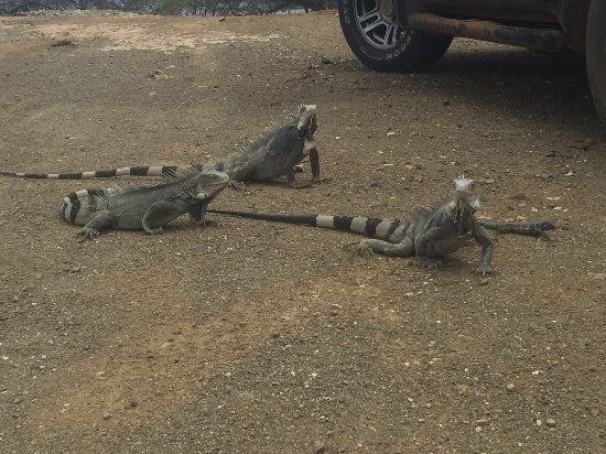 Parque Nacional Washington-Slagbaai, Bonaire: photo0.jpg