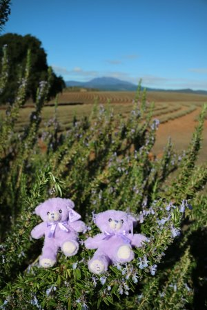Tasmanien, Australien: In the farm