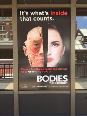Bodies... the Exhibition Atlanta at the Premier Exhibition Center: photo0.jpg