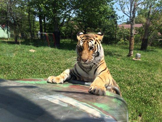 Magnetic Hill Zoo: photo0.jpg