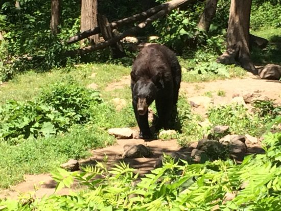 Magnetic Hill Zoo: photo6.jpg