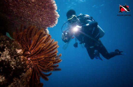 Shark Diver Ocean Center