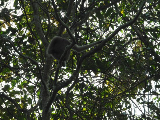Hoollongapar Gibbon Sanctuary