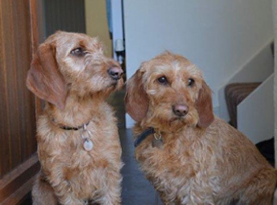 Tregongeeves Farm Cottages: Dogs welcome