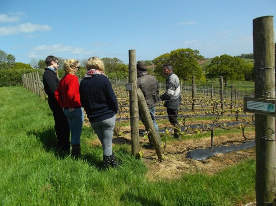 Winkleigh, UK: Join one of our Vineyard Tours with a wine tasting