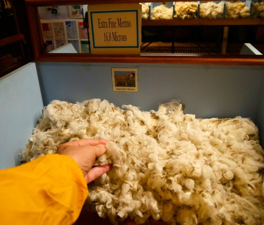 Ross, Australia: You get to feel the different kinds of wool.