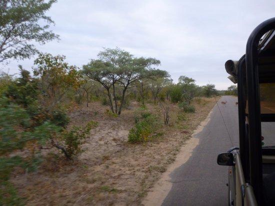 Kruger National Park: Game drive