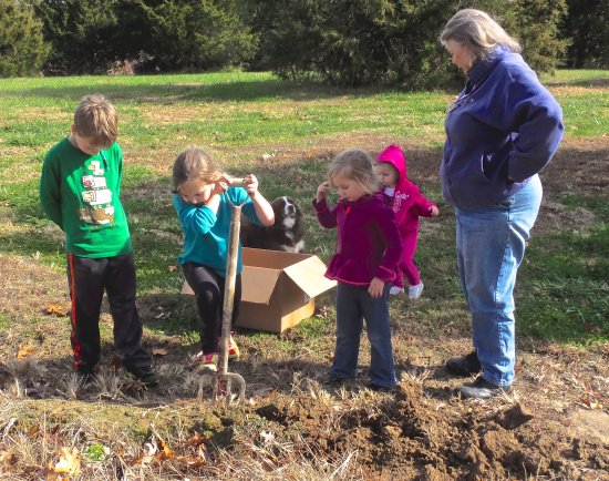 Rock Eddy Bluff Farm: Digging potatoes from the garden