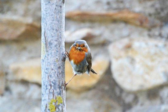 El Patio del Maestrazgo: Puedes observar las aves
