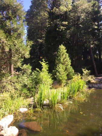 Twin Peaks, CA: photo3.jpg