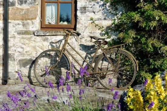 Whitegate, İrlanda: in the garden...