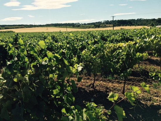Domaine Saint Hilaire: photo9.jpg