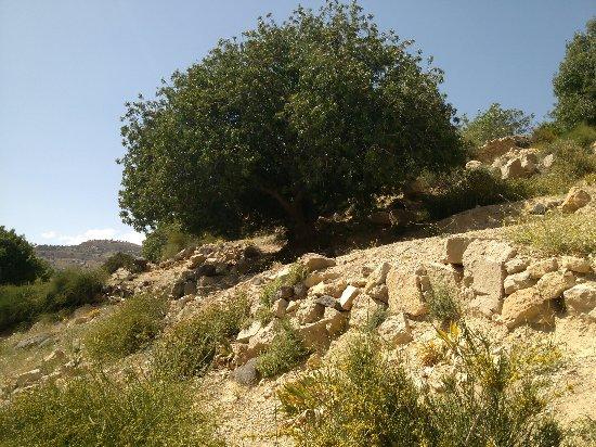Dana, Jordânia: 0512151501d_large.jpg