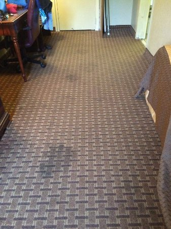 Mid Towne Inn and Suites: carpet in room