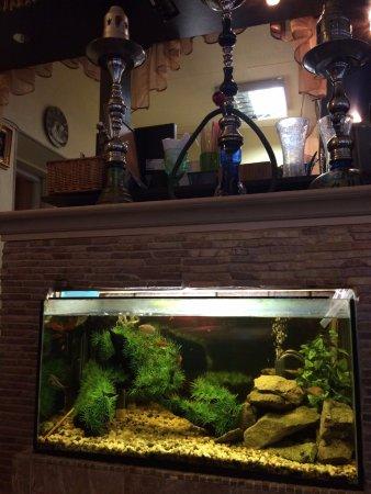 Antalya Kebab: Nice aquarium