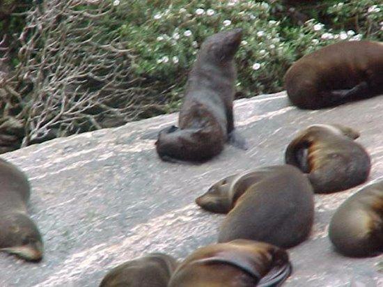 Blue Duck Cafe & Bar: seals