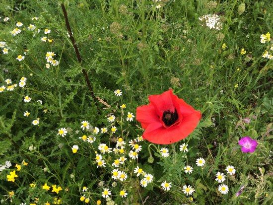 Astley Hall: Wild flower cultivation