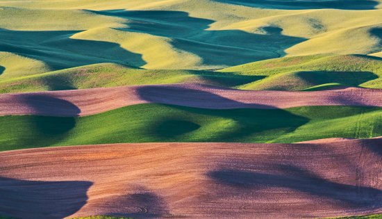 Colfax, WA: Steptoe Hill - Rolling Fields in Morning
