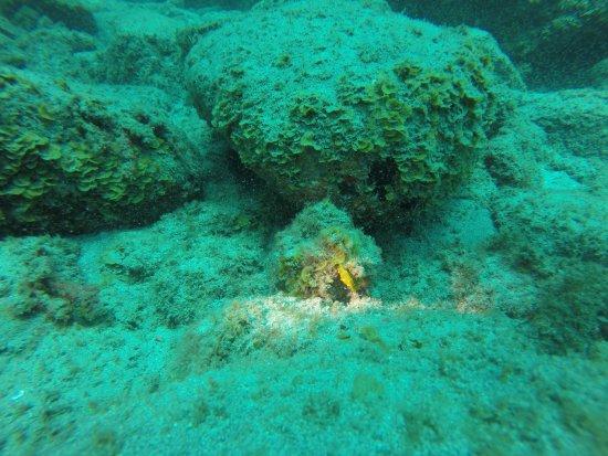 Blue Bottom Diving : hippocampe
