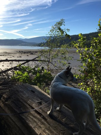 Port Moody, Canadá: Our dog Abby looking out over the inlet. Lots of birds to check out!