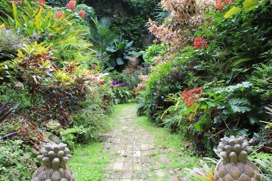 Hunte's Gardens: Pathway in Huntes Gardens