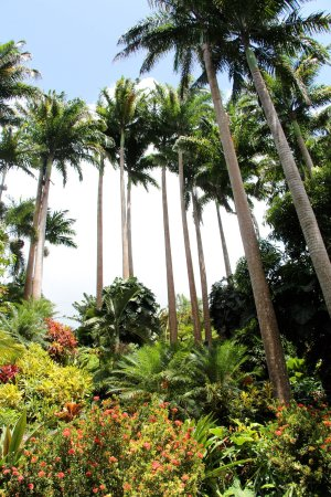 Hunte's Gardens: Vista in Huntes Gardens
