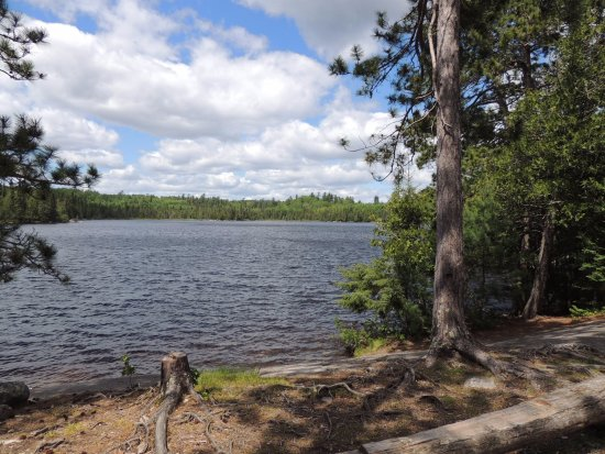 Ely, MN: Campsite on Oyster Lake