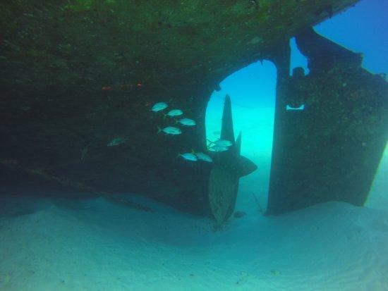 Kittiwake Shipwreck & Artificial Reef: schooling Jacks