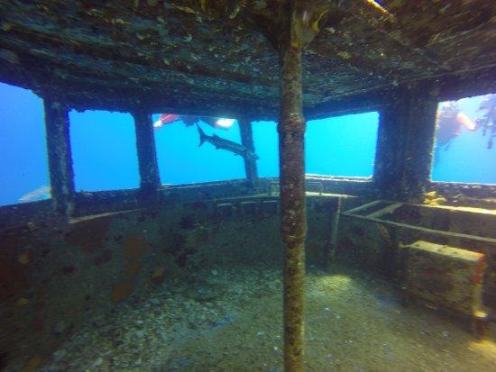 Kittiwake Shipwreck & Artificial Reef: barracuda handing out by the wheelhouse