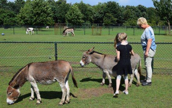 Groeningen, Nederland: Tussen de ezeltjes...ja gezellig!