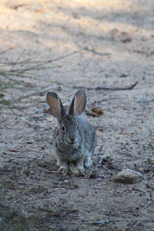 Joshua Tree Retreat Center at the Institute of Mentalphysics : rabbit