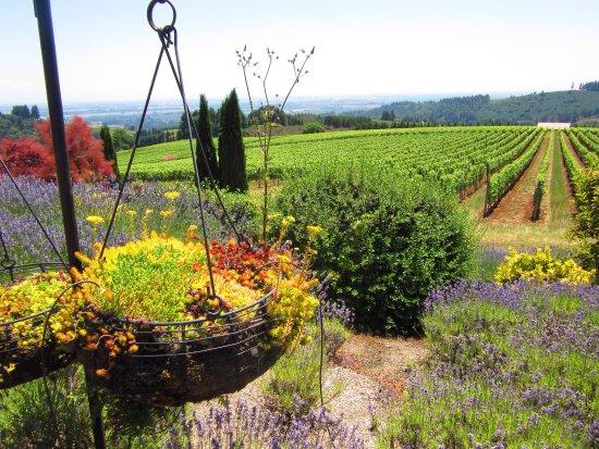 Black Walnut Inn & Vineyard: The beautiful Black Walnut Inn and Winery