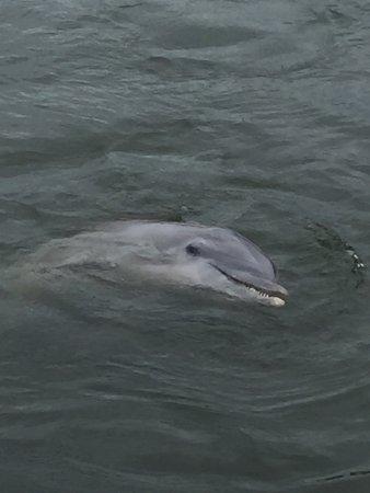 Dolphin Research Center Aufnahme