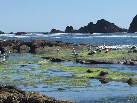 Seal Rock Tide Pools