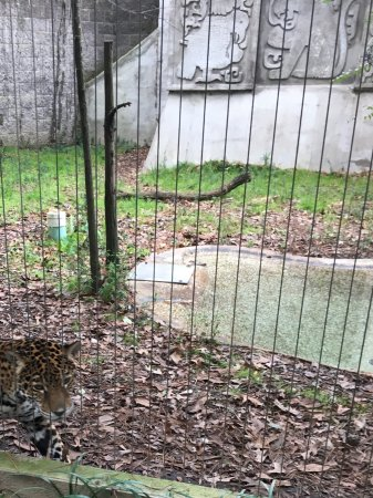 Ellen Trout Zoo : Jaguar up close and personal.